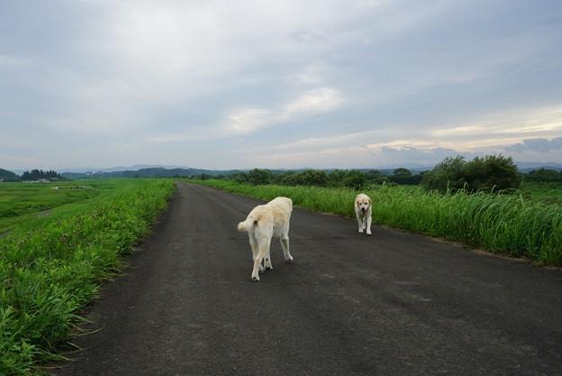 きょうだい散歩