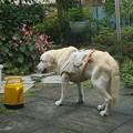 Photos: 庭で息抜き