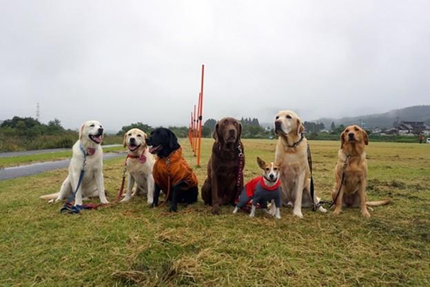 警察犬の大会で