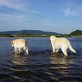 Photos: 川 ぬるし