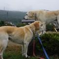 Photos: 小雨中