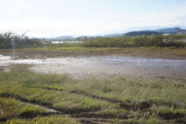 阿武隈川河川敷