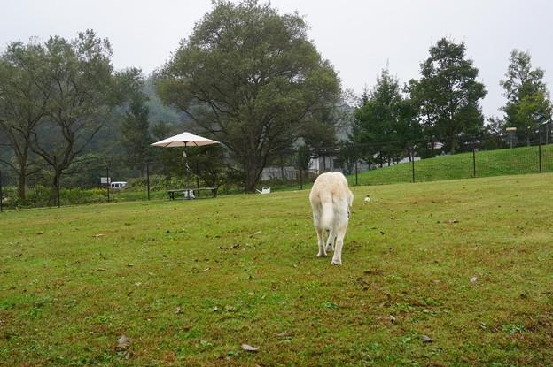 小雨のドッグラン