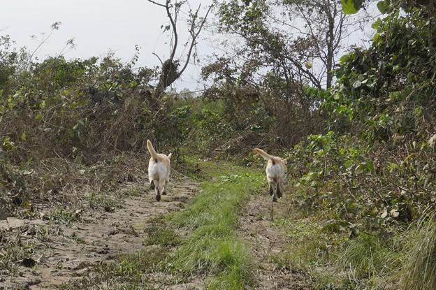 台風後の河川敷