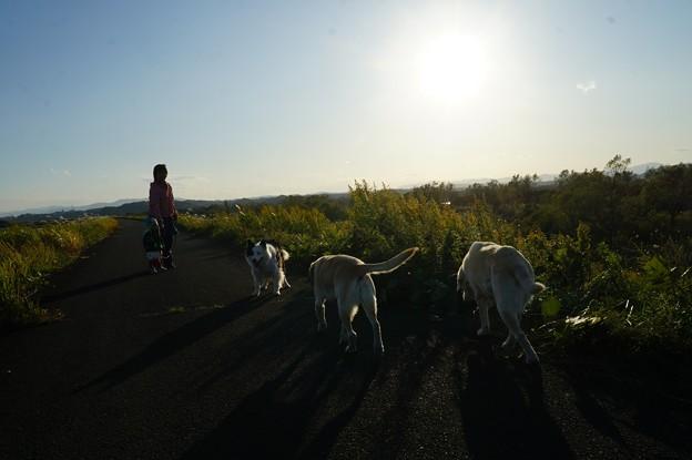 Photos: 夕日に向かって