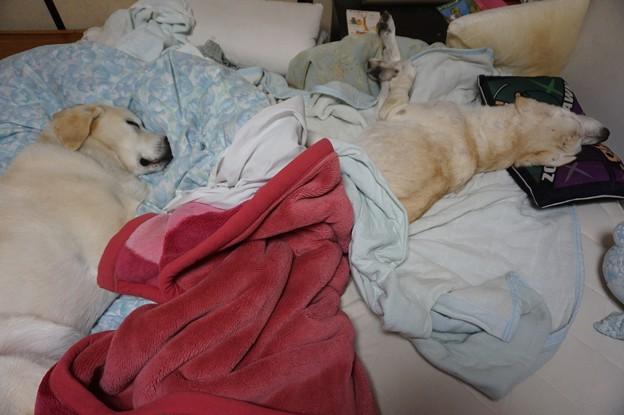 ベッド占拠