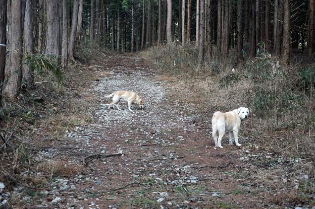 トトロの森