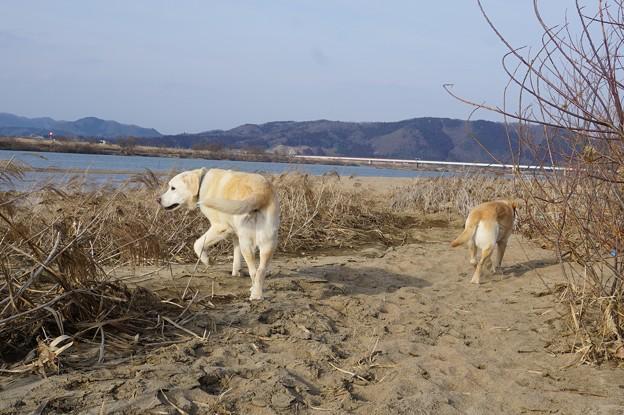 Photos: 河原へ