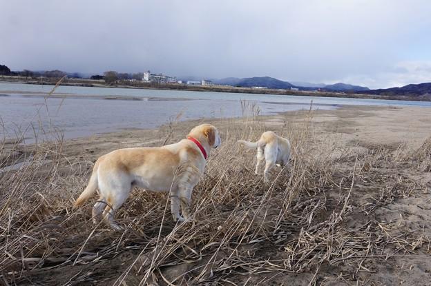 午後の河原