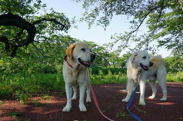 木陰の散歩