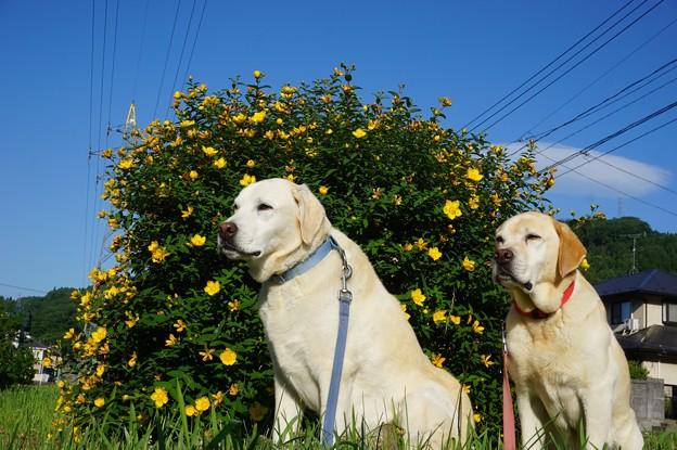 黄色の花と