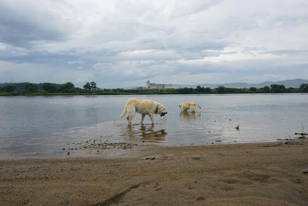 河原で遊ぶ