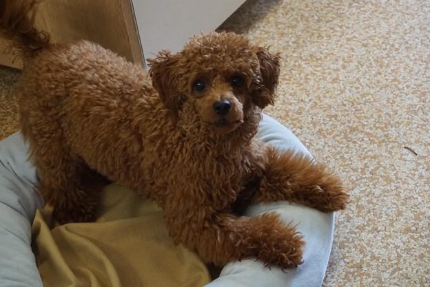 病院の看板犬