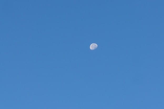 朝のお月さま