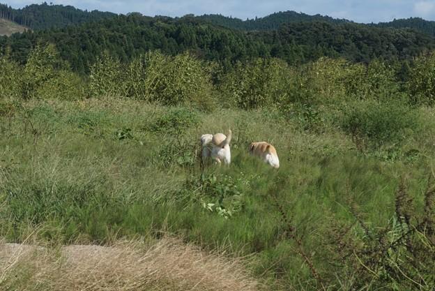 草むら遊び