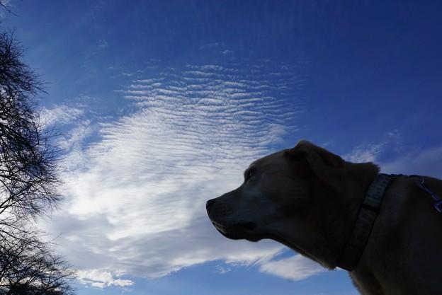 雲とわんこと