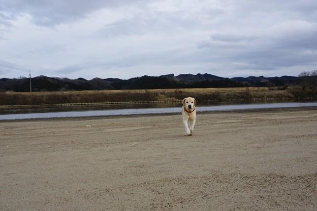 川原で散歩
