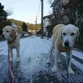 Photos: 散歩もしんどい