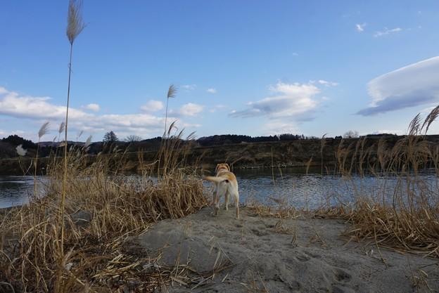 川原の散歩