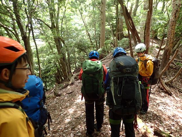 林業用の道