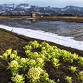 写真: 等待春天