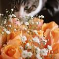 Photos: rose1707