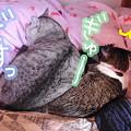 写真: シンクロしっぽ02