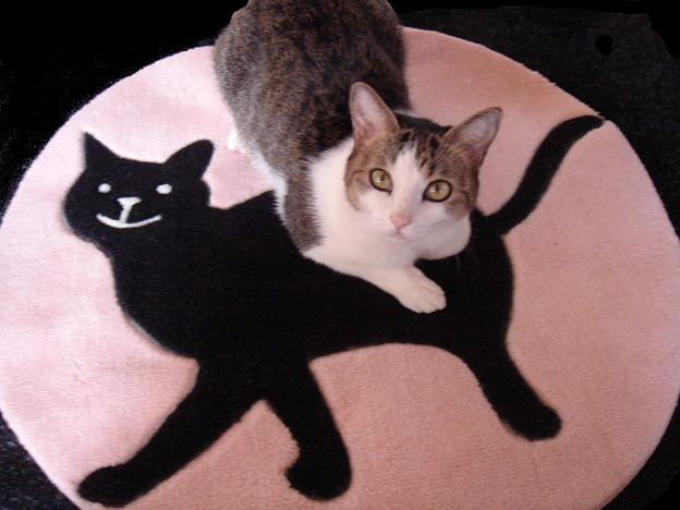 黒猫とぶさかわ01