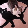 Photos: 黒猫とぶさかわ01
