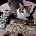 Photos: 黒猫とぶさかわ02