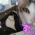 Photos: 黒猫とぶさかわ03