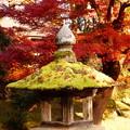 写真: 灯篭の苔