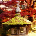 Photos: 灯篭の苔