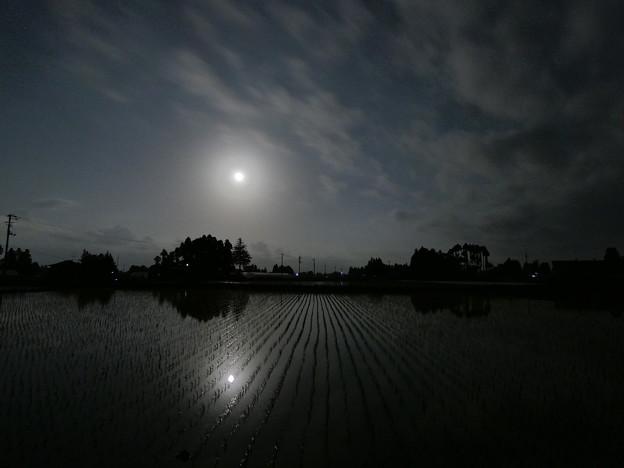 月明かりの田んぼ