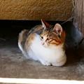 Photos: 宮城県大崎市・猫1