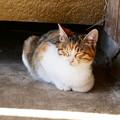 Photos: 宮城県大崎市・猫2