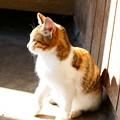 Photos: 宮城県大崎市・猫3