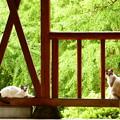 Photos: 野良猫2