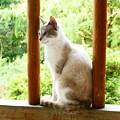 Photos: 野良猫3