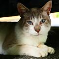 Photos: 野良猫4