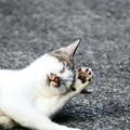 Photos: 野良猫5