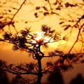 Photos: 秋分の日の朝日