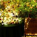 Photos: 夜の果樹園:まるせい果樹園