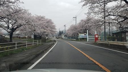 お花見フィッシング加賀FA
