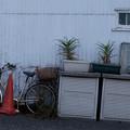写真: 駐車場の片隅で