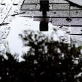 Photos: 雨上がり #2