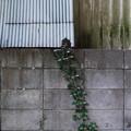 Photos: 伸びる
