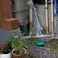 Photos: 軒先の花
