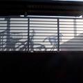Photos: 自転車置き場
