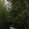 銀閣寺へ続く道